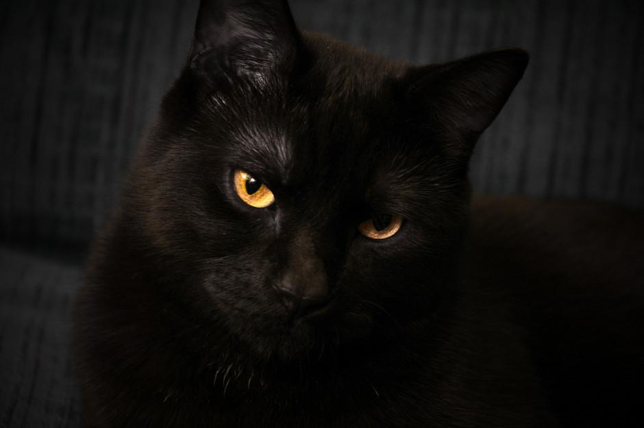 Black Furball