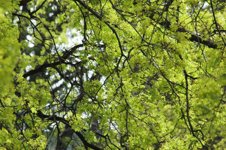 The great greening #1